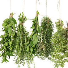 5 Best Herbs To Boost Immunity