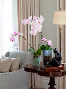 orchid-by-design-feat-image