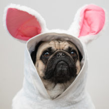 Cute Outfits To Dress Up Your Dog