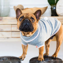 Jumpers Your Puppy Will Love