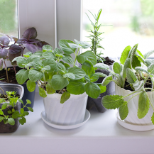 11 Herbs To Grow In Your Kitchen